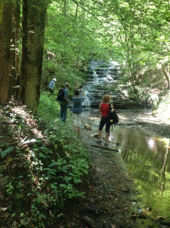 Dawson Forest 2 at falls 2014