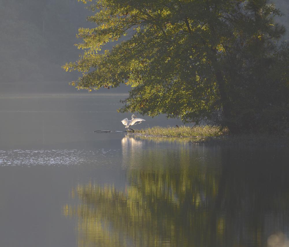 Lullwater egret KKolb_DSC4033
