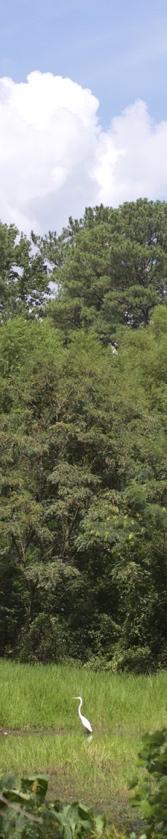 johns homestead egret cropped 2_DSC1883